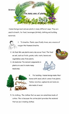 Interactive worksheet Uses of plants
