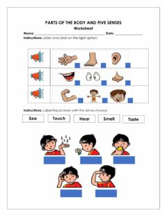 Interactive worksheet Body Parts and five senses