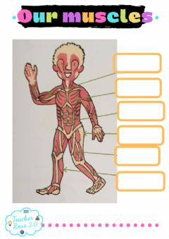 Interactive worksheet Our muscles