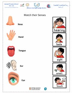 Interactive worksheet How people use the 5 senses