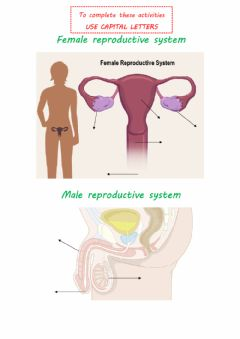 Ficha interactiva Reproductive systems