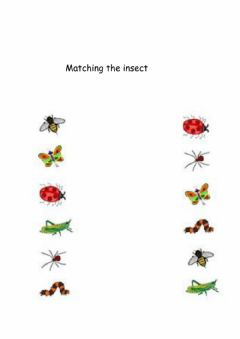 Interactive worksheet Matching insect