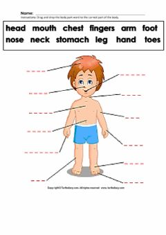 Interactive worksheet Label the Body