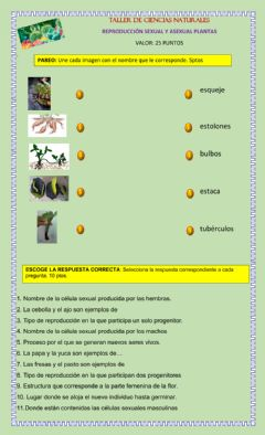 Interactive worksheet Reproducción sexual y asexual de las plantas