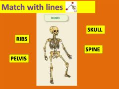 Ficha interactiva Skeleton