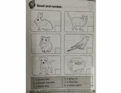 Interactive worksheet My Pet