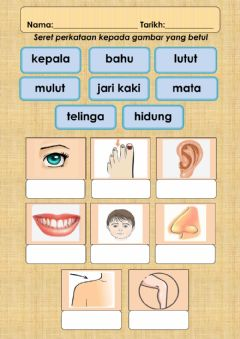 Interactive worksheet Anggota Badan