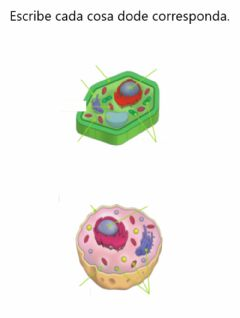 Ficha interactiva Parts of cell