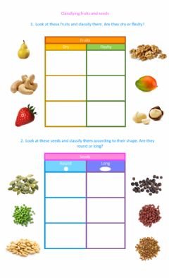Ficha interactiva Classifying fruits and seeds