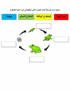 Interactive worksheet دورة الضفدع