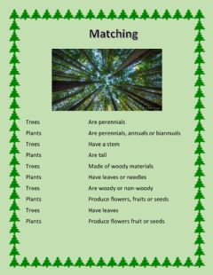 Interactive worksheet Trees and Shrubs: Matching