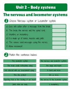 Ficha interactiva Nervous and locomotor systems