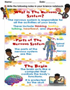 Interactive worksheet The Nervous System - Notes