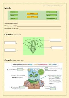 Interactive worksheet Nutrition and reproduction in plants.