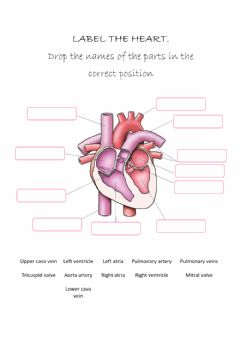 Interactive worksheet Heart parts