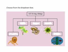 Interactive worksheet Five kingdoms of living things