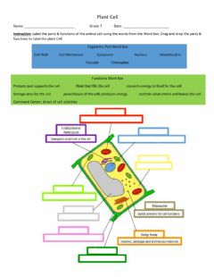 Interactive worksheet Plant Cell