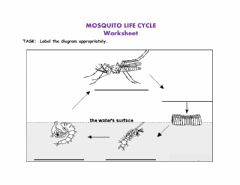 Interactive worksheet Life Cycle of a Mosquito