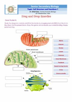 Interactive worksheet Senior Secondary Biology: Cell Structure and Function 1