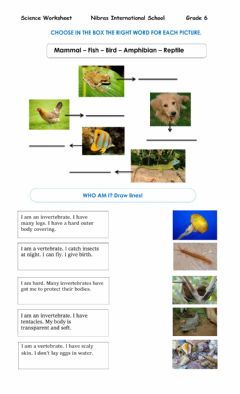 Interactive worksheet vertebrates and invertebrates worksheet