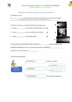Interactive worksheet El ESQUELETO