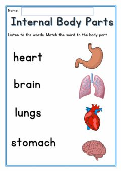 Interactive worksheet Internal Body Parts