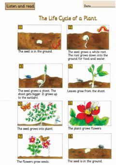 Interactive worksheet The life cycle of a plant