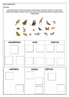 Interactive worksheet Classes dos animais
