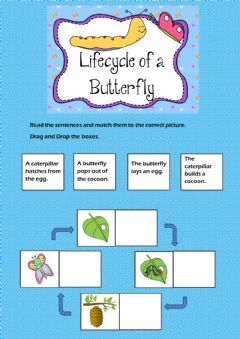 Ficha interactiva Lifecycle of a butterfly