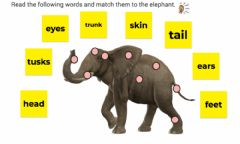 Interactive worksheet Parts of the elephant