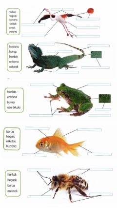 Interactive worksheet Animaliak2