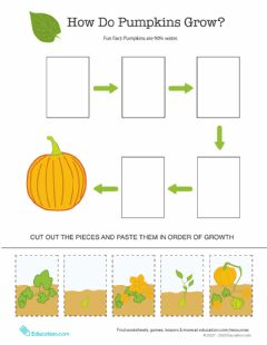 Ficha interactiva Pumpkin, Pumpkin Sequencing