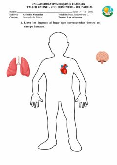 Interactive worksheet Los pulmones