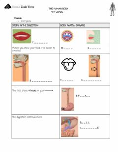 Ficha interactiva 4th.The human body. DIGESTIVE SYSTEM