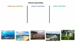 Interactive worksheet Types of Ecosystems