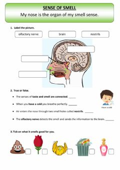 Interactive worksheet My sense of smell