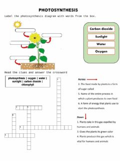 Interactive worksheet Photosynthesis -