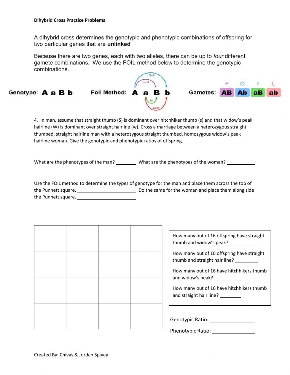 Dihybrid Cross Interactive Activity worksheet