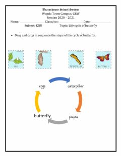 Ficha interactiva Life cycle of butterfly