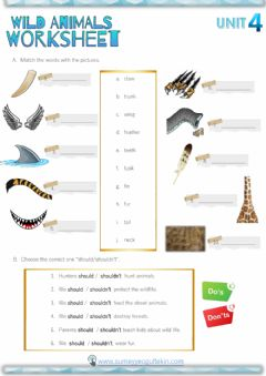 Interactive worksheet Animal Body Parts - Should&Shouldn't