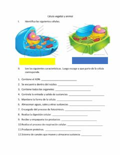 Interactive worksheet Célula vegetal y animal