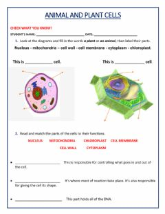 Ficha interactiva Animal and Plant Cell
