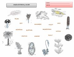 Interactive worksheet Biodiversity