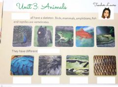 Interactive worksheet Unit 3: Animals