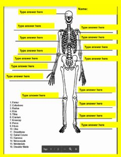 Interactive worksheet Skeletal System