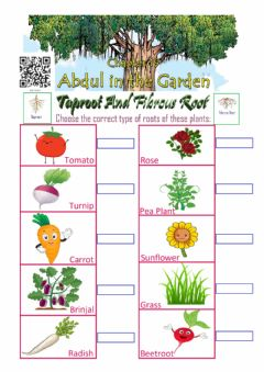 Interactive worksheet Abdul in the Garden: Taproot and Fibrous Root