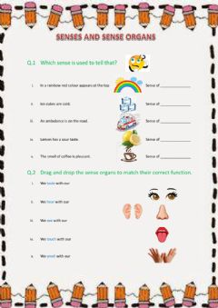 Interactive worksheet Senses and sense organs
