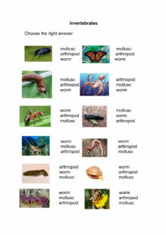 Interactive worksheet Invertebrtes