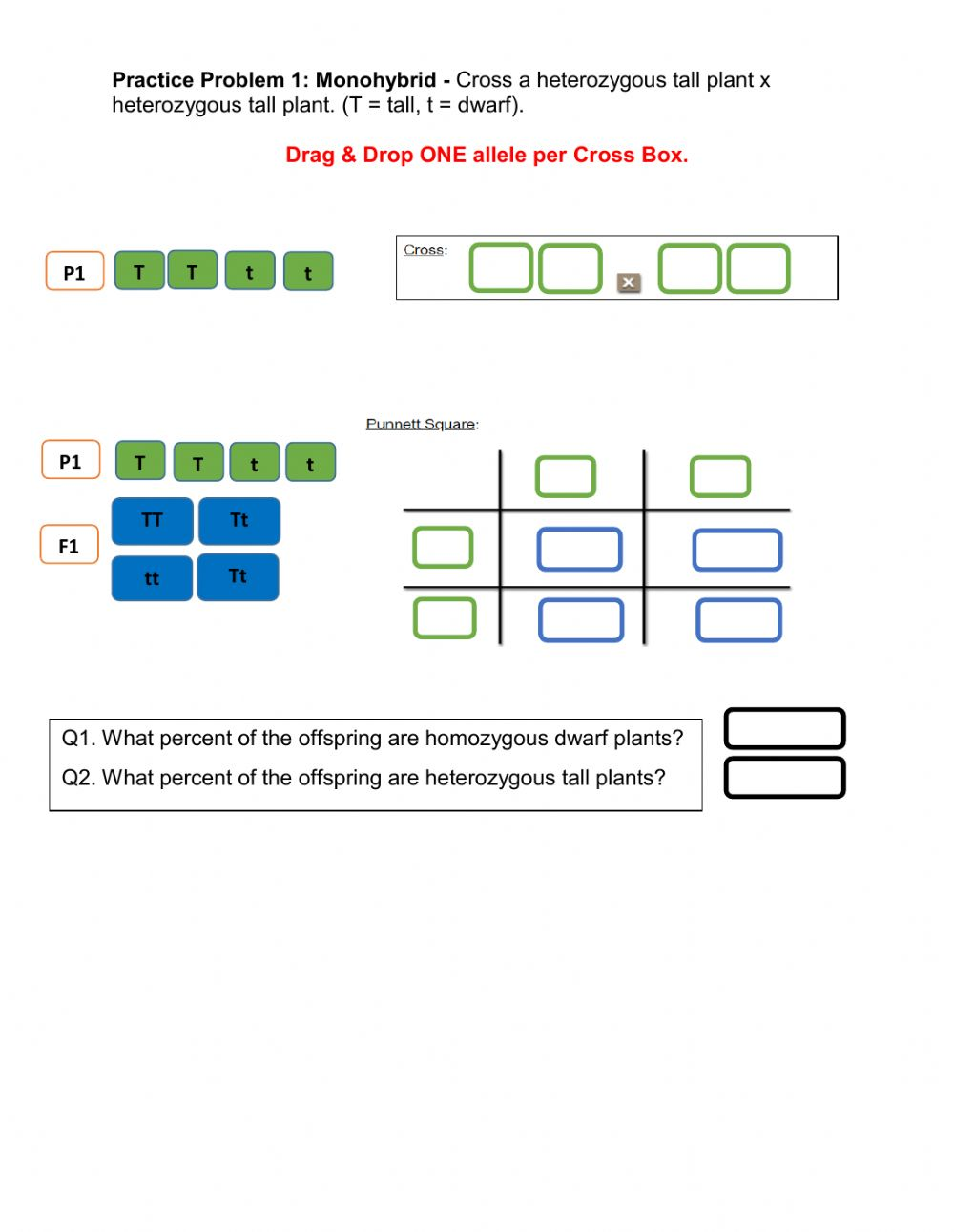 Mendelian Monohybrid Crosses worksheet