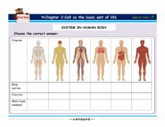 Interactive worksheet System in the human body